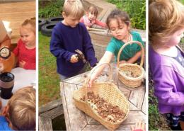Hazelnut harvest at kindy